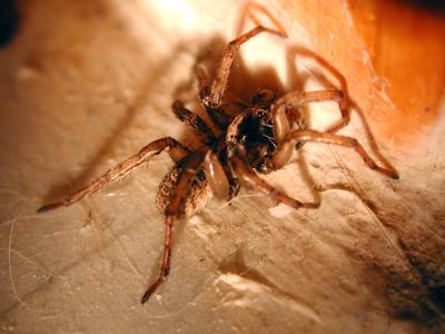 Bathroom spider photo 01