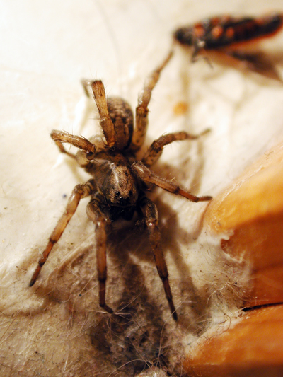 Bathroom spider photo 02