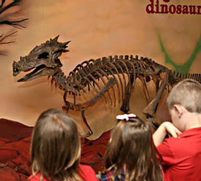 Dracorex hogwartsia photo from The Children's Museum of Indianapolis.