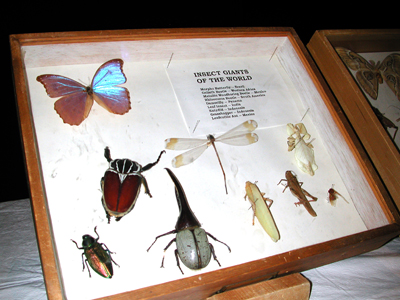 Iowa State Insect Zoo Photo 01