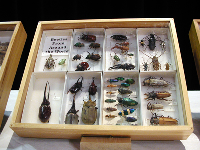 Iowa State Insect Zoo Photo 02