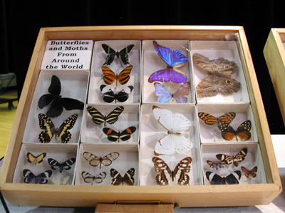 Iowa State Insect Zoo Photo 03