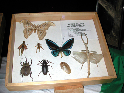 Iowa State Insect Zoo Photo 04
