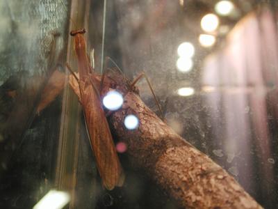 Iowa State Insect Zoo Photo 06