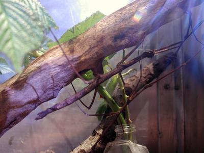 Iowa State Insect Zoo Photo 07