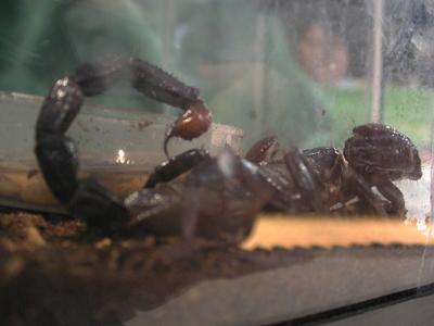 Iowa State Insect Zoo Photo 10