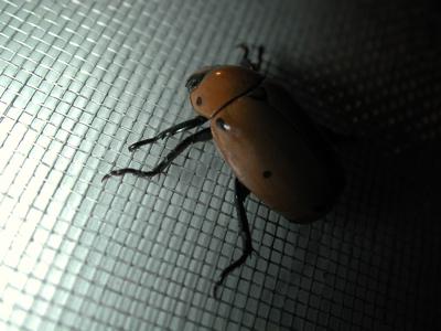 June Bug Photo 02.