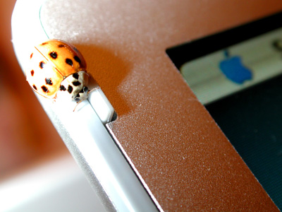 Photo of a Ladybug on a 17 inch Apple PowerBook.