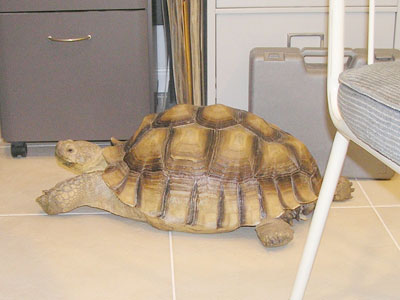 Photo of Nicholas the tortoise