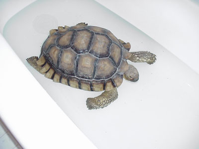 Another photo of Nicholas the tortoise