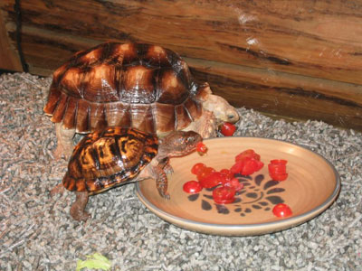 Photo of Sam and Ella the tortoises