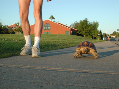 Tortoise Walking Photo 02