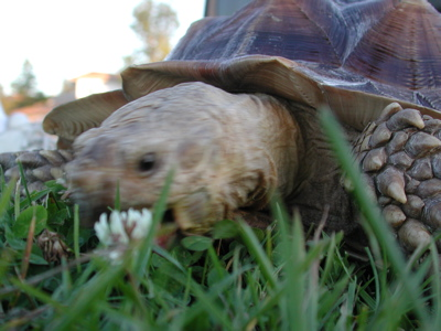 Tortoise Walking Photo 05
